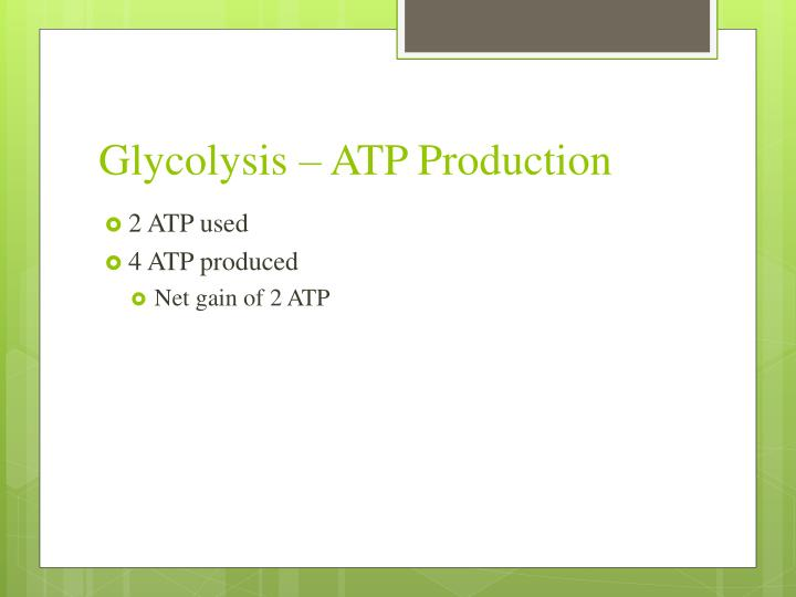 Glycolysis – ATP Production