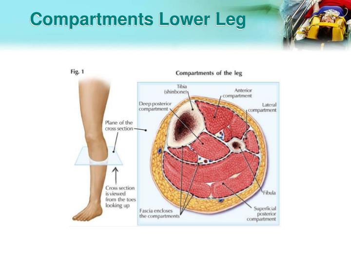 Compartments Lower Leg
