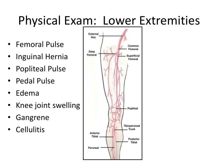Physical Exam:  Lower Extremities