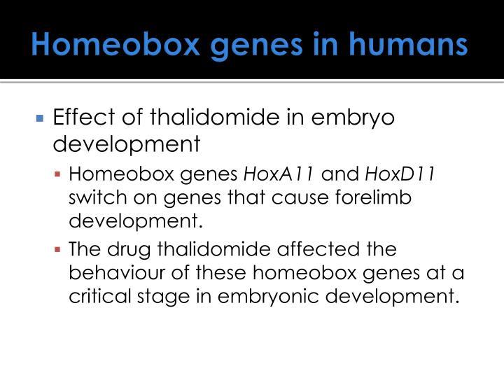 Homeobox genes in humans