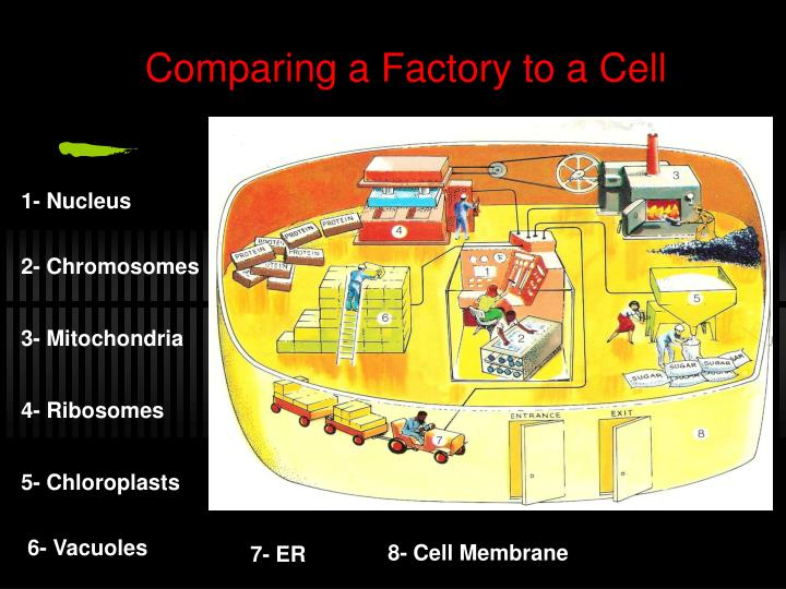 Comparing a Factory to a Cell