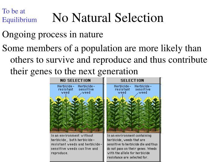 Is Natural Selection A Random Or Nonrandom Process