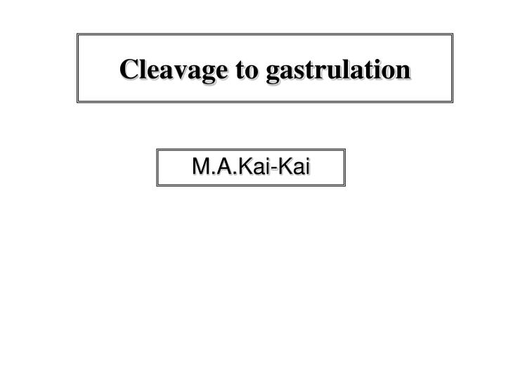 ppt cleavage to gastrulation powerpoint presentation