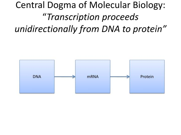 Central Dogma of Molecular Biology: ""