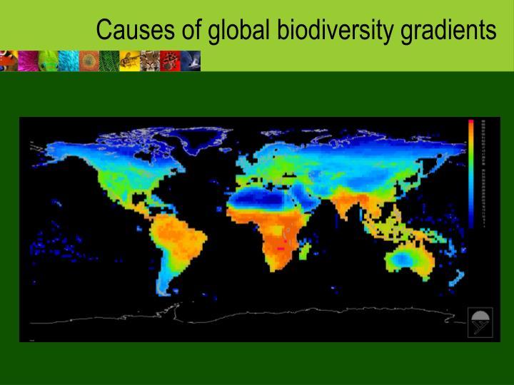 Causes of global biodiversity gradients