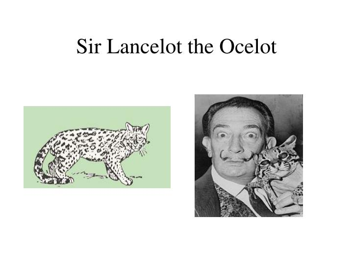 Sir lancelot the ocelot