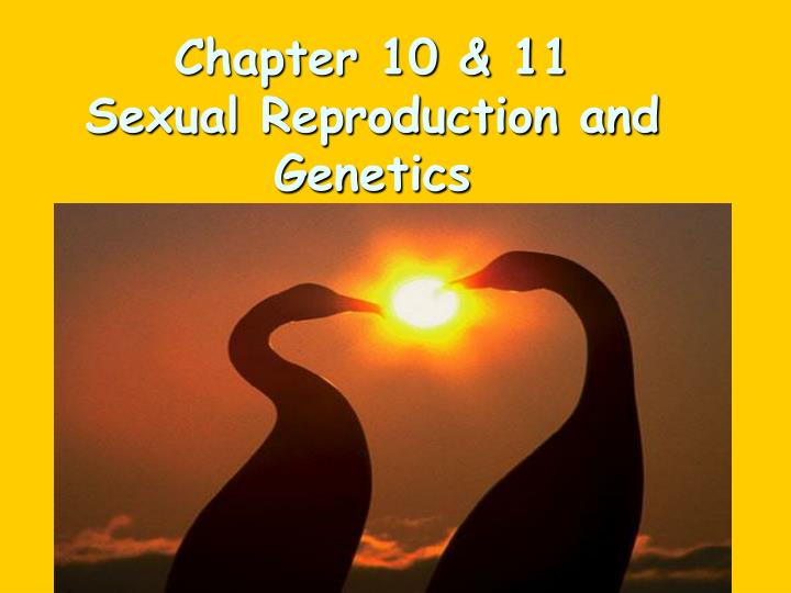 chapter 10 11 sexual reproduction and genetics n.