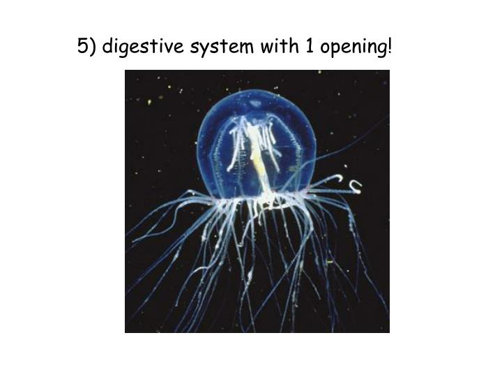 5) digestive system with 1 opening!