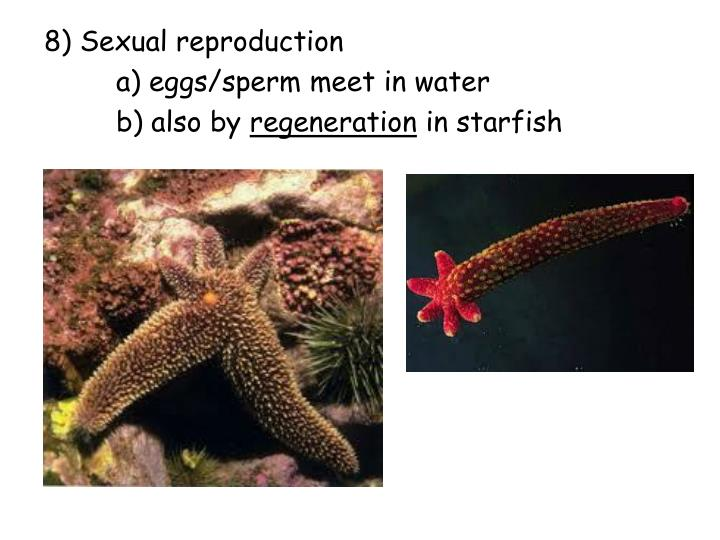 8) Sexual reproduction