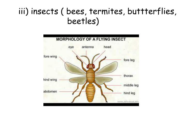 iii) insects ( bees, termites, buttterflies, beetles)