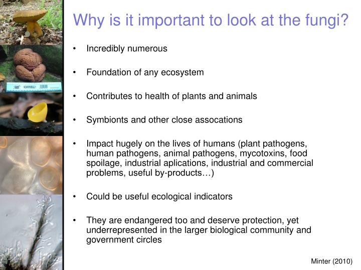 Why is it important to look at the fungi?