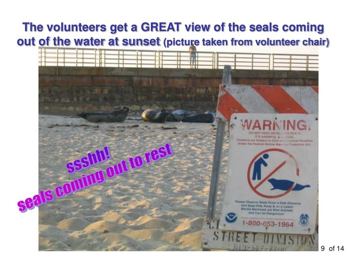 The volunteers get a GREAT view of the seals coming out of the water at sunset