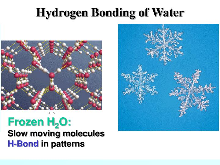 Hydrogen Bonding of Water