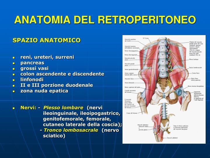 ANATOMIA DEL RETROPERITONEO