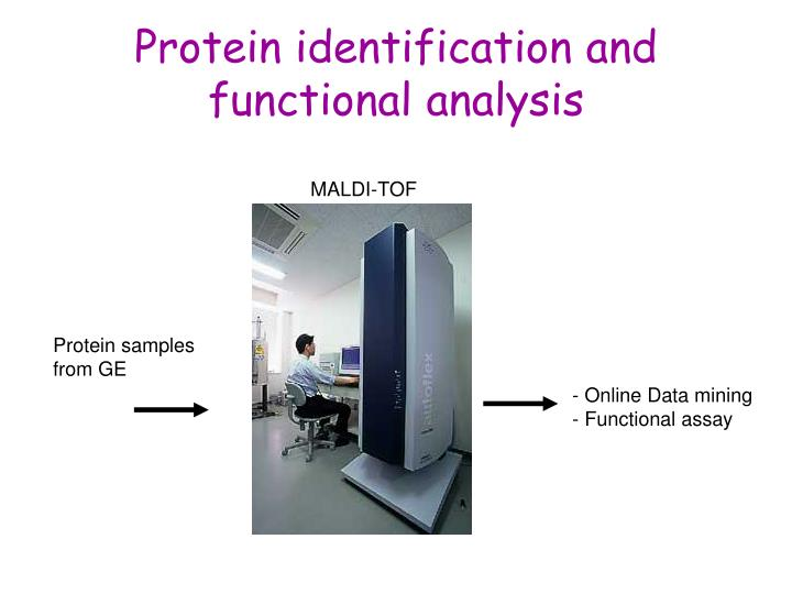 Protein identification and functional analysis