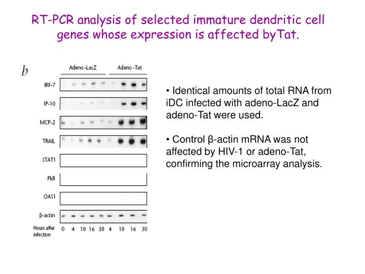 RT-PCR analysis of selected immature dendritic cell genes whose expression is affected byTat.
