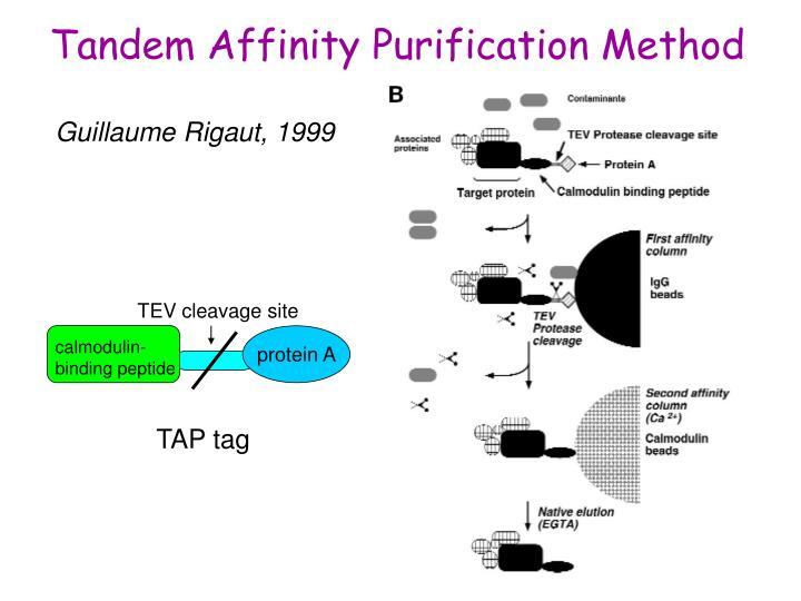 Tandem Affinity Purification Method