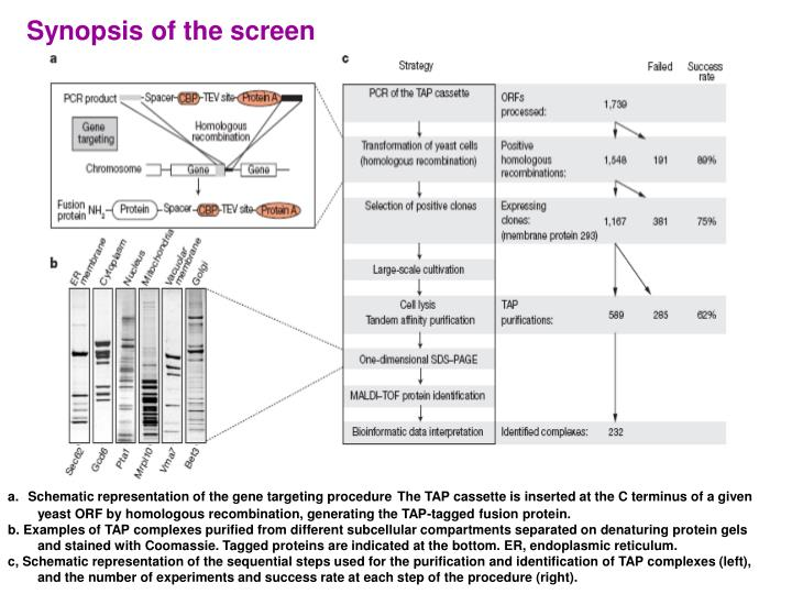 Synopsis of the screen