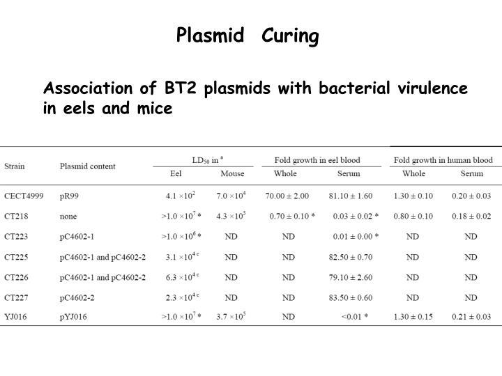 Plasmid  Curing
