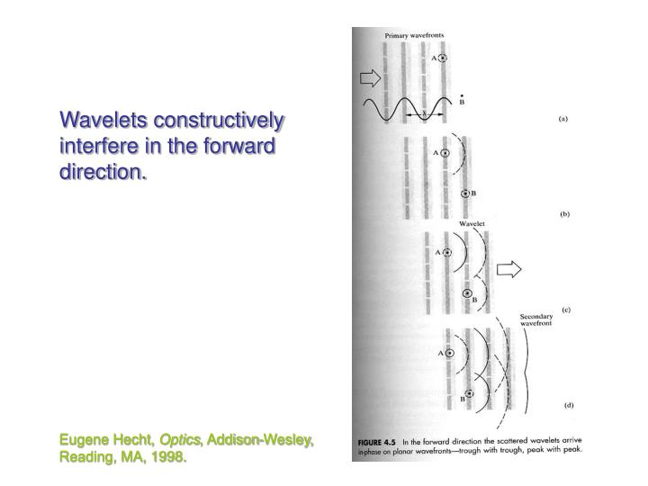 Wavelets constructively interfere in the forward direction.