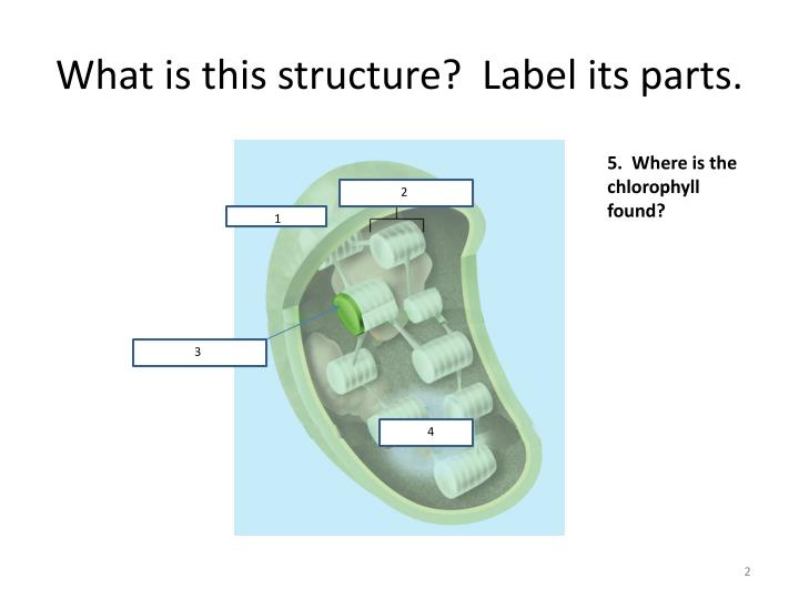 What is this structure label its parts