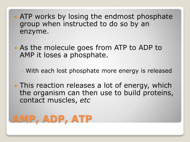 ATP works by losing the endmost phosphate group when instructed to do so by an enzyme.