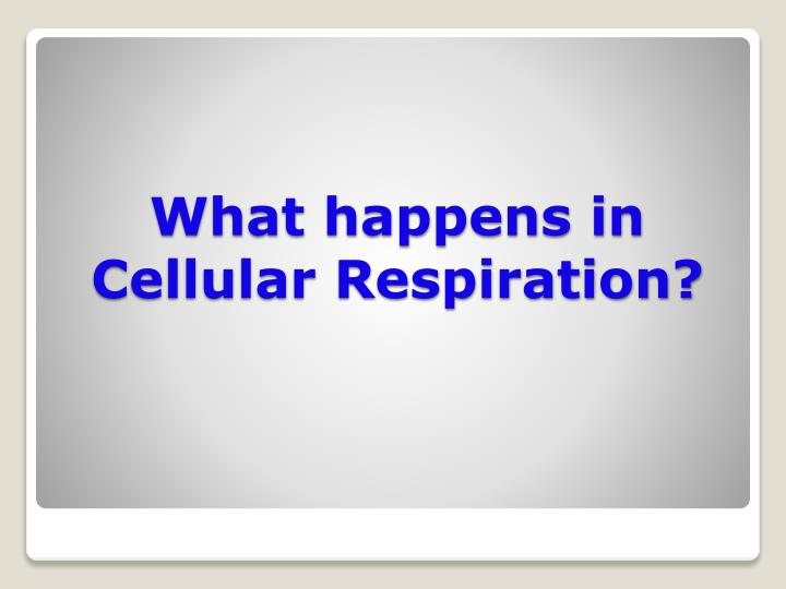 What happens in Cellular Respiration?