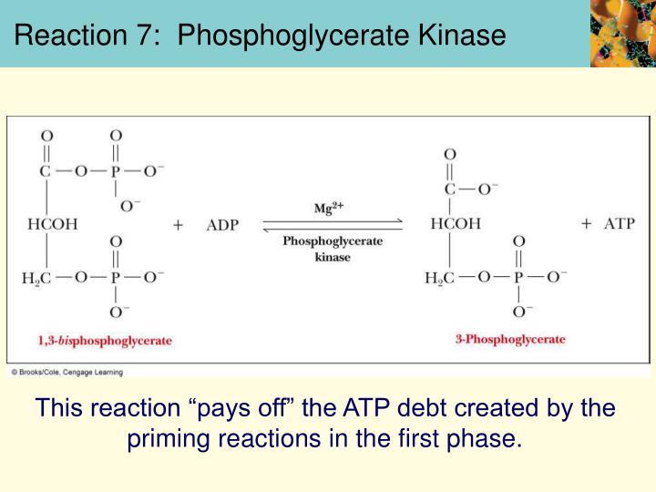 Reaction 7:  Phosphoglycerate Kinase