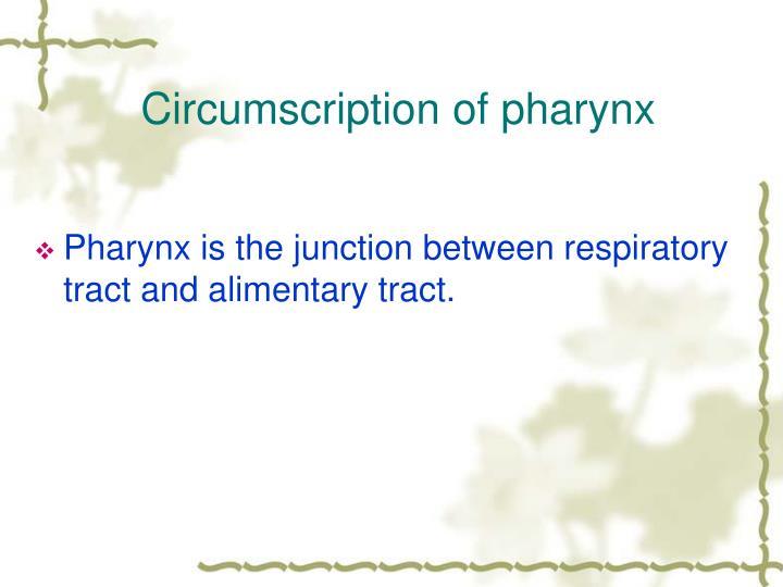 Circumscription of pharynx