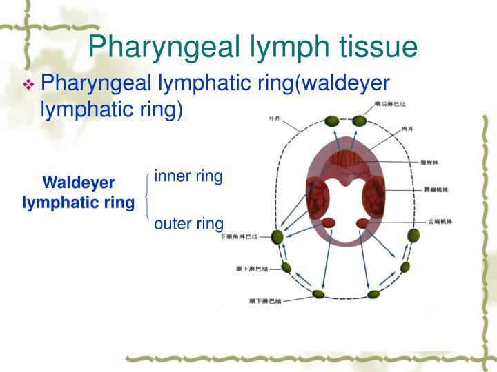 Pharyngeal lymph tissue