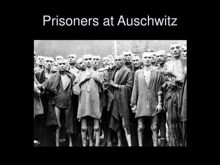 Prisoners at Auschwitz