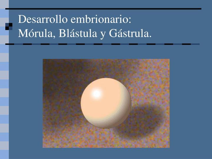 Desarrollo embrionario: