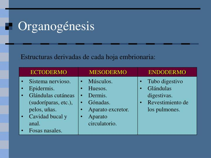 Organogénesis