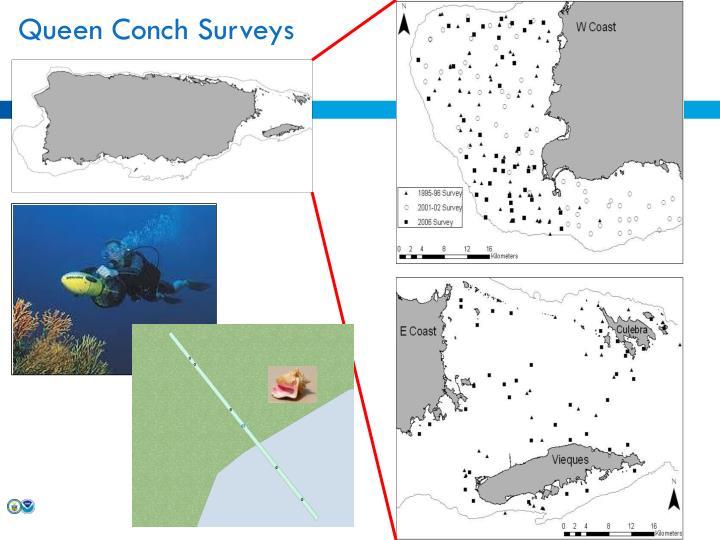 Queen Conch Surveys