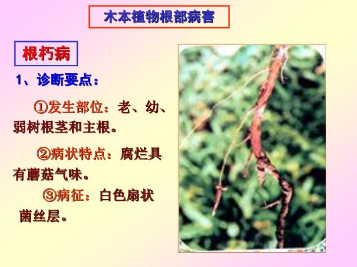 木本植物根部病害