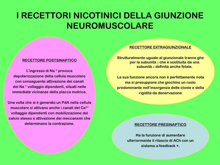 I RECETTORI NICOTINICI DELLA GIUNZIONE NEUROMUSCOLARE