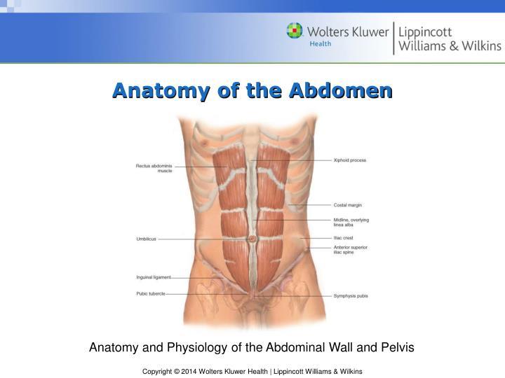 Ppt chapter 11 the abdomen powerpoint presentation id6244828 anatomy of the abdomen ccuart Gallery