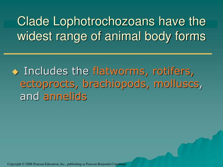 Clade Lophotrochozoans have the widest range of animal body forms