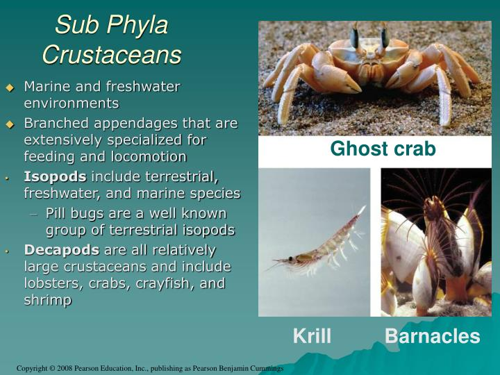 Sub Phyla Crustaceans