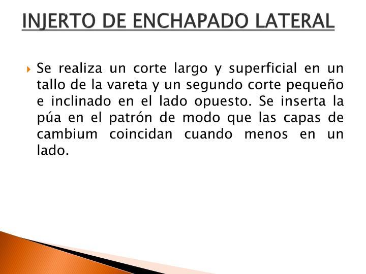 INJERTO DE ENCHAPADO LATERAL
