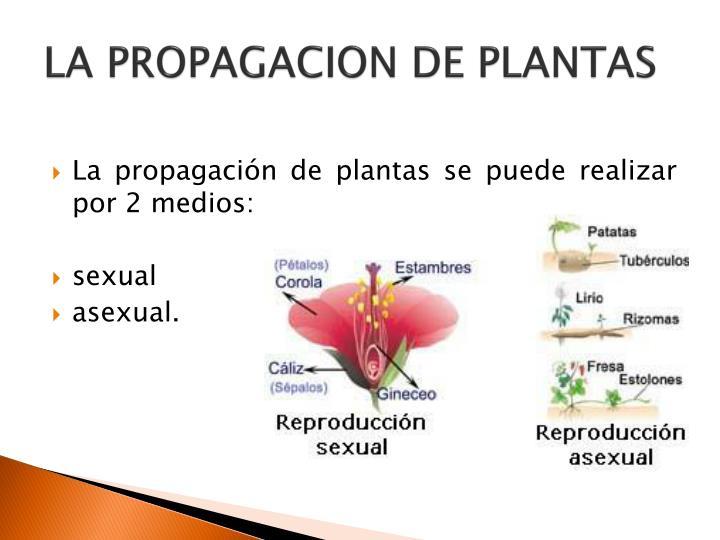 La propagacion de plantas