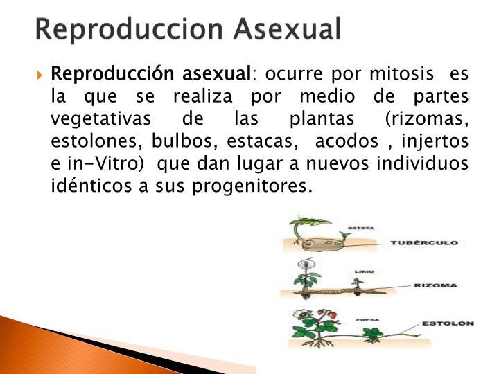 Propagacion asexual de las plantas ppt