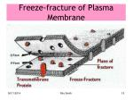 freeze fracture of plasma membrane