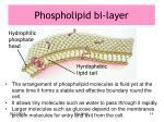 phospholipid bi layer