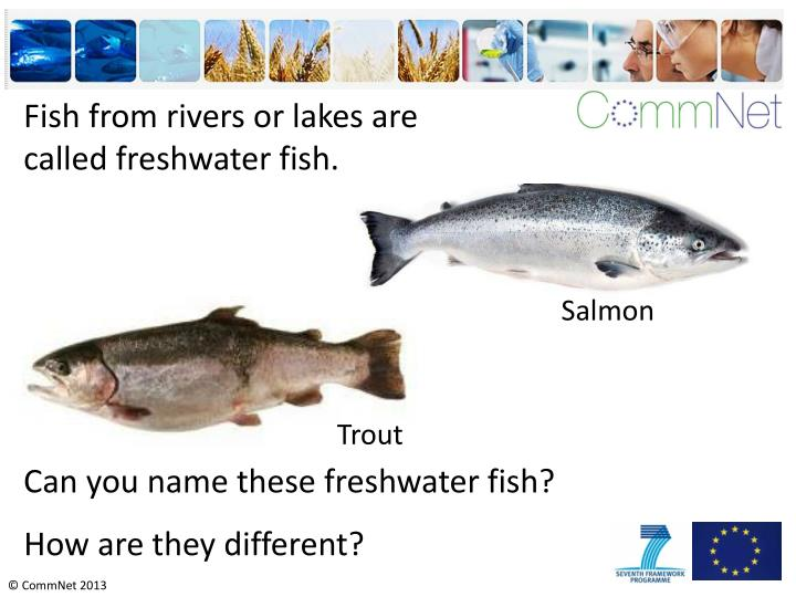 Fish from rivers or lakes are called freshwater fish.