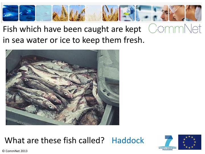 Fish which have been caught are kept