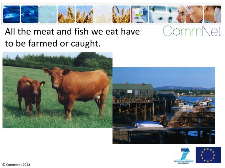All the meat and fish we eat have to be farmed or caught.