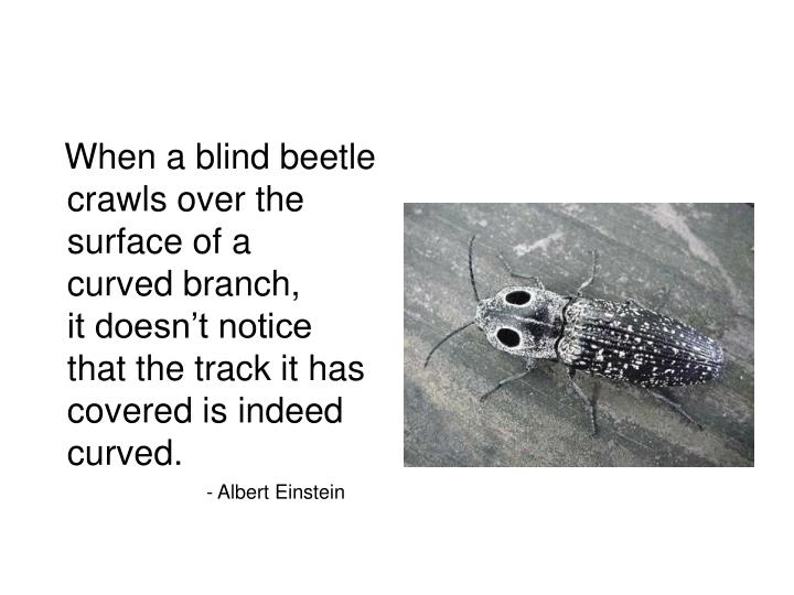 When a blind beetle
