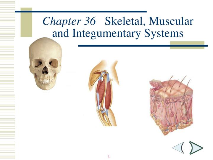 chapter 36 skeletal muscular and integumentary systems n.