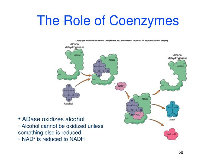 The Role of Coenzymes